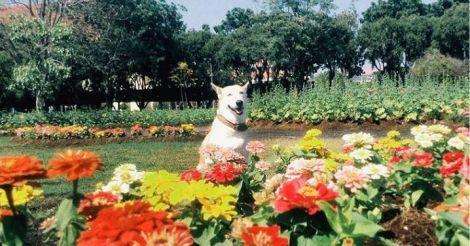 กลูต้า หมาหน้ายิ้ม